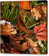 Fall Leaves 5 Acrylic Print
