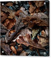 Fall Leaves And Acorns Acrylic Print