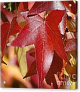 Fall Leaves I Acrylic Print