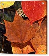 Fall Leaves I I Acrylic Print
