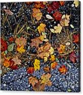 Fall Leaves On Pavement Acrylic Print by Elena Elisseeva