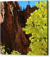 Fall Light From Zion Acrylic Print