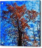 Fall Majesty Acrylic Print