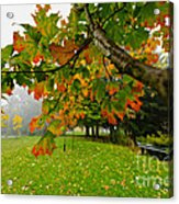 Fall Maple Tree In Foggy Park Acrylic Print by Elena Elisseeva