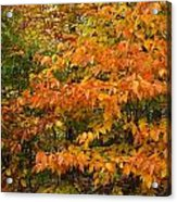 Fall Mix Acrylic Print