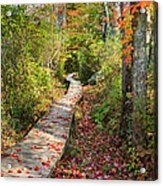 Fall Morning Acrylic Print by Bill Wakeley
