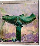 Fall Mushroom 17 Acrylic Print
