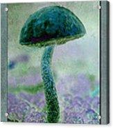 Fall Mushroom 19 Acrylic Print