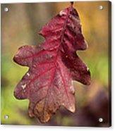 Fall Oak Leaf Acrylic Print