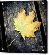 Fall Of The Leaf Acrylic Print