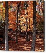 Fall On A Stump Acrylic Print