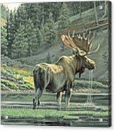 Fall On The Yellowstone Acrylic Print