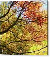 Fall Outstretched Acrylic Print