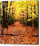 Fall Path Acrylic Print