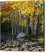 Fall Pond In Mammoth Acrylic Print