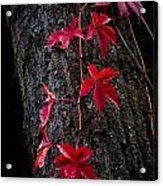 Fall Red Acrylic Print
