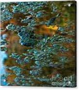 Fall Reflection Acrylic Print