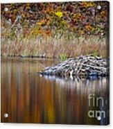 Fall Reflections Acrylic Print