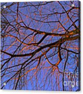 Fall Reflections By Diana Sainz Acrylic Print