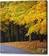 Fall Road And Trees Acrylic Print