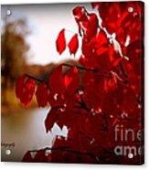 Fall Scenery Acrylic Print