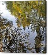 Fall Series 34 Acrylic Print