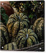 Fall Squash Harvest Acrylic Print