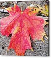 Fall St. Louis 7 Acrylic Print