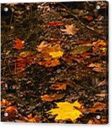 Fall Stream Bed Acrylic Print