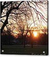 Fall Sunset Tree Silhouettes Acrylic Print