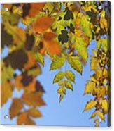 Fall Time Acrylic Print