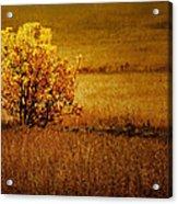 Fall Tree And Field #2 Acrylic Print