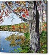 Fall Tree Acrylic Print