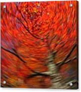 Fall Tree Carousel Acrylic Print by Juergen Roth