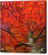Fall Tree Carousel Acrylic Print