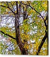 Fall Tree Acrylic Print by Baywest Imaging