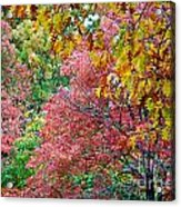 Fall Tree Leaves Acrylic Print