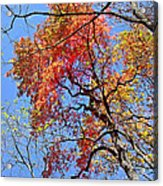 Fall Trees 2 Of Wnc Acrylic Print
