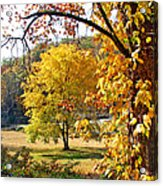 Fall Trees 4 Of Wnc Acrylic Print