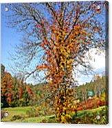 Fall Trees 5 Of Wnc Acrylic Print