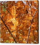 Fall Trees II Acrylic Print