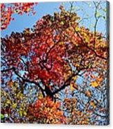 Fall Trees Of Wnc Acrylic Print