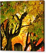 Fall Trees On A Country Road 3 Acrylic Print