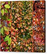 Fall Trio Collage Acrylic Print