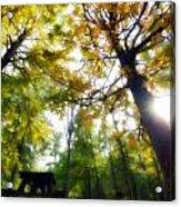 Fall Vii Acrylic Print