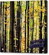 Fall Woods In Michigan Acrylic Print