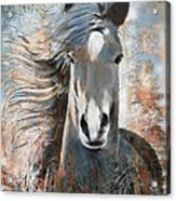 Fall Yearling Acrylic Print