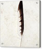 Fallen And Found - Hawk Feather Acrylic Print