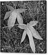 Fallen Autumn Leaves In The Grass During Morning Frost Acrylic Print