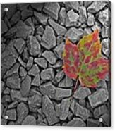 Fallen Beauty Acrylic Print